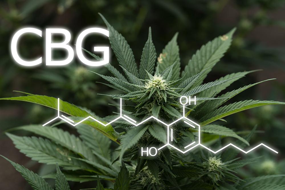 CBG - a kannabinoidok új sztárja
