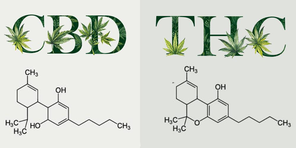 CBD vs THC: A különbségek és hasonlóságok